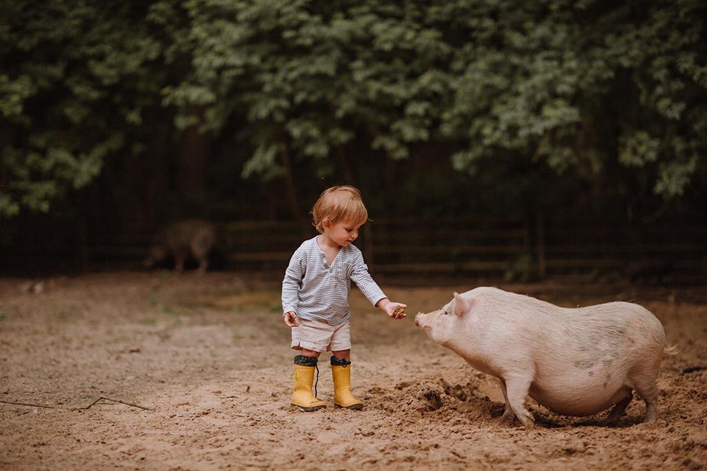 Bauernhof familien fotoshooting mit ferkel und schweinen